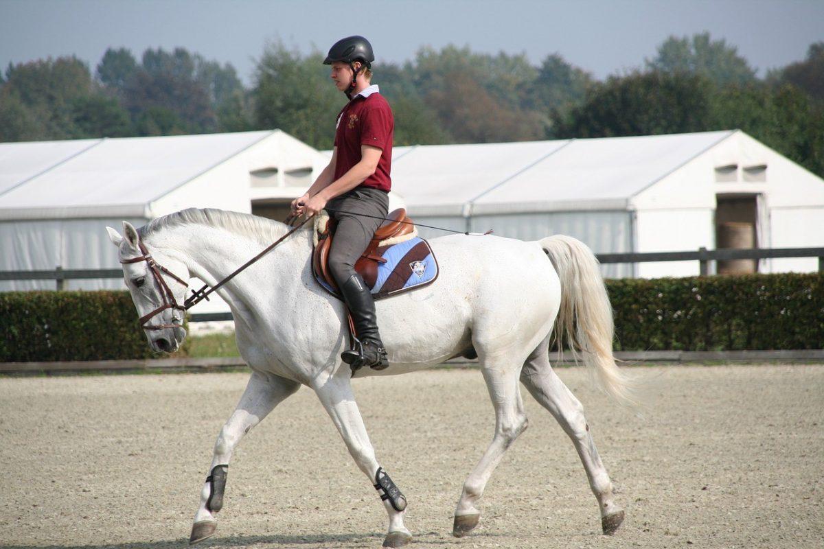 กีฬาขี่ม้า การแข่งขันความเร็วที่ต้องร่วมแรงร่วมใจระหว่างคนและสัตว์สี่ขา